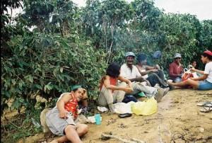 Brazilian Coffee Pickers in Bahia Taking a Break