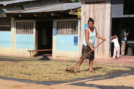 Peru Coffee Rust Outbreak Rises to 25%, 2013-14 Crop Down to 4.1M Bags