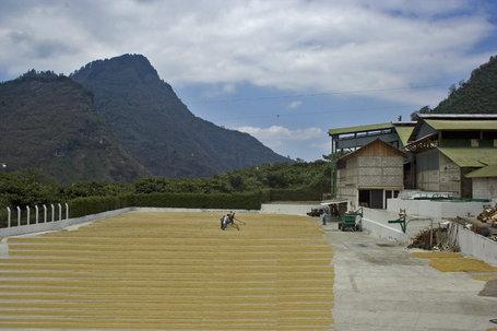Coffee of the Day: Highland Huehuetenango From Guatemala