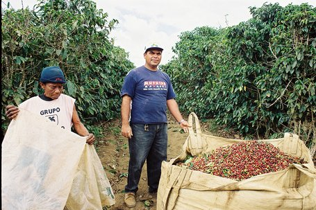 Chuva e umidade podem prejudicar a qualidade do café do Brasil