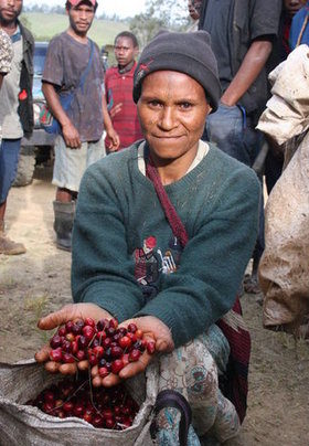 Coffee Picking at the Colbran Estate in Papua New Guinea