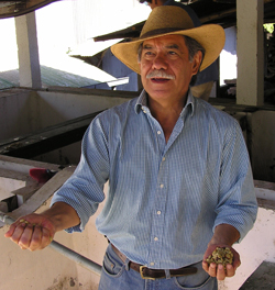 Guatemala's El Injerto Take 1st Price with $45.10/Lb in Cup of Excellence