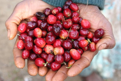 Coffee of the Day: Blue Mountain Highland Blend From Papua New Guinea