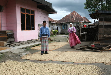 DIRECTLY from Indonesia, SPECIAL REPORT: Indonesian Coffee Growers Continue to Struggle With Climate Effect