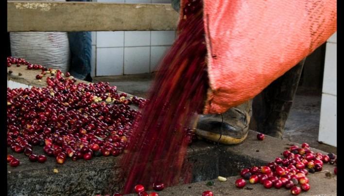 Felicidades a Don Arturo y a Todos los Productores de Café de Guatemala