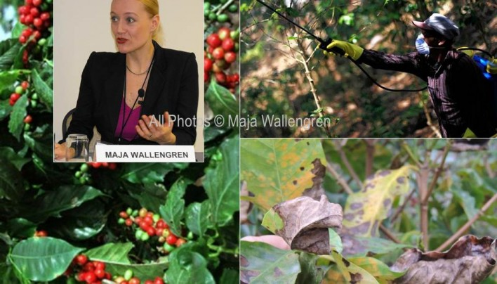SpillingTheBeans Discusss Social Implications of Coffee Rust Disaster at Inter-American Dialogue