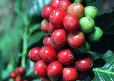 SPECIAL REPORT: Top-10 Trend Setters for World Coffee Prices In Today's Volatile Market