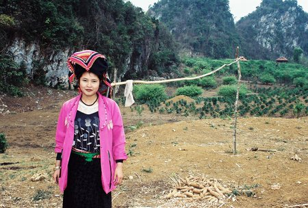 Vietnam Started To Expand Arabica Coffee Area In 1989