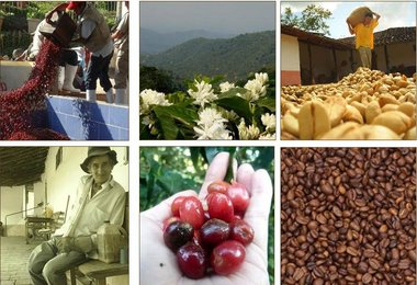 Coffee News NEXT From Indonesia, Brazil, South Korea, Price Outlook, Cameroon, Kenya, Colombia, Mexico, Nepal and China