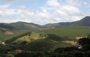 Blog do Café: Preços baixos NãO cobrem custos da produção no Brasil