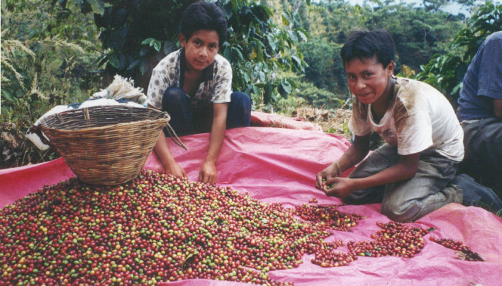 SPECIAL REPORT: Is Fairtrade Coffee Based On An Unjust Movement That Only Serves The Rich?
