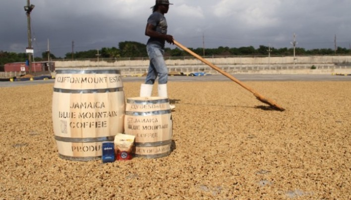 "ORIGIN FOCUS: 2 –Jamaica And Her Amazing ""Blue Mountain"" Coffee"