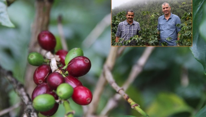ORIGIN FOCUS: 3–Jamaica's Best At Clifton Mount and Clydesdale Coffee Estates