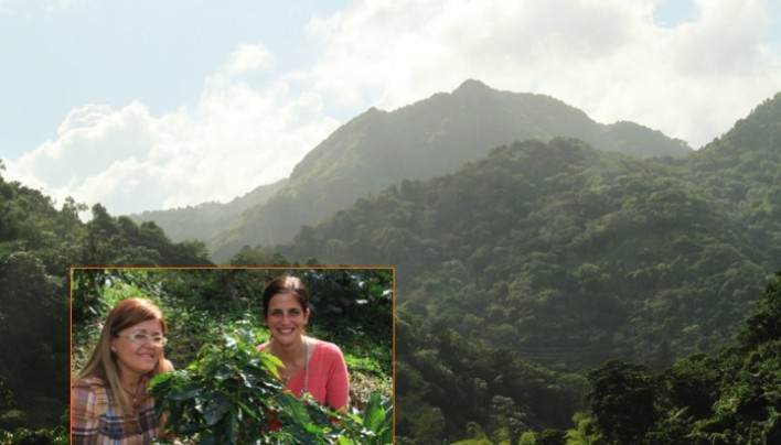 ORIGIN FOCUS: 9 –Puerto Rico's Lively Coffee History From Slave Revolts To Preserving Great Beans