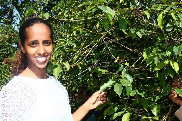 SPECIAL REPORT: Ethiopia's Coffee Growers Targets Specialty As Harar And Kaffa Regions Make Come Back