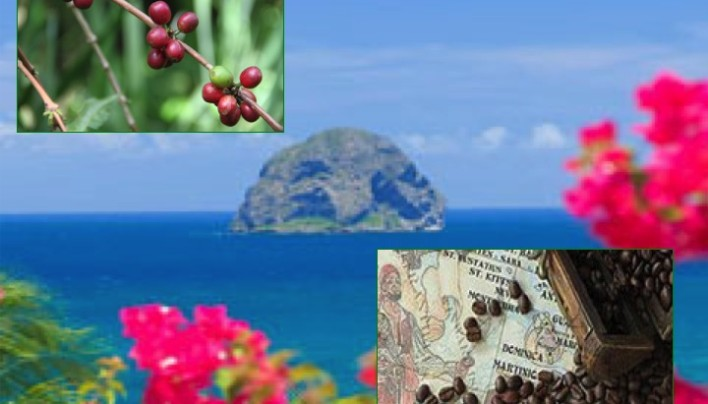 ORIGIN FOCUS: 6–Dominica One Of The World's Tiniest Coffee Islands