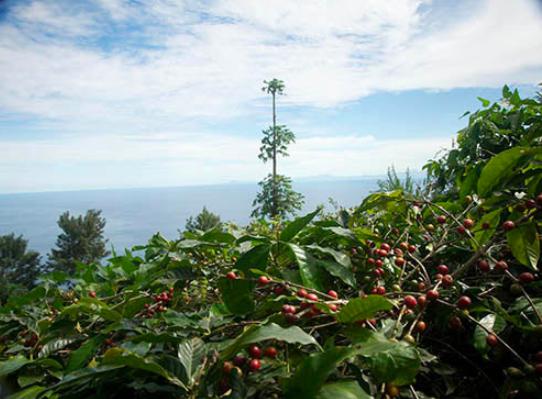 Coffee in Cape Verde