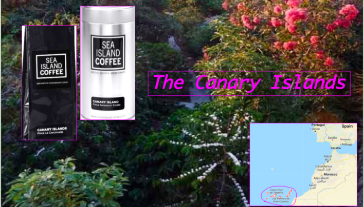 Coffee of The Day: Sea-Island's Beautiful Exotic Beans From The Canary Islands