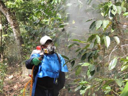 Blog de Café en Español: En Tiempos de Crisis de la Roya