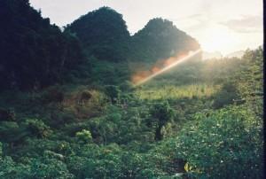 Son La Arabica Coffee Region in Vietnam