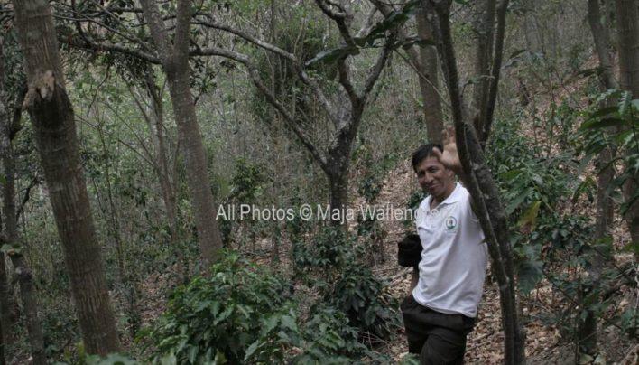 Ecuador Grows Both Arabica and Robusta Coffee