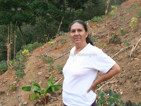 Ecuador's Alpine Coffee Growing Altitudes