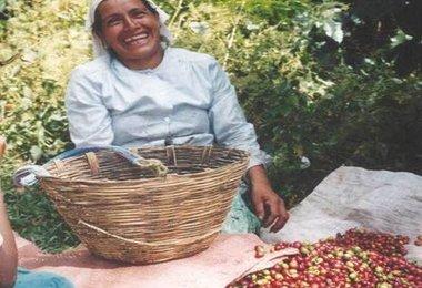 Blog de Café en Español: Nueva Política Para el Sector Cafetalero de México