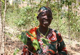 Rwanda Coffee Industry And The Genocide Widow Survivors