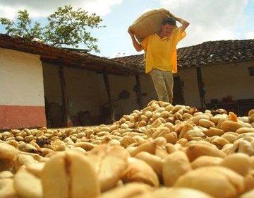 Blog de Café: En Colombia, Precio de Carga de Café Baja a Nivel Más Bajo Desde 2008