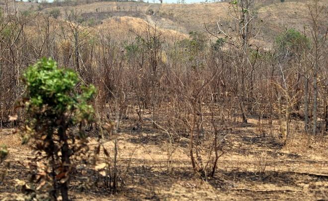 Rains below average in minas gerais care coffee producers